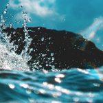 L'IoT protège l'eau, l'IA et les microbes, imprimant les poumons