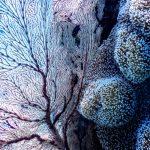Calcul en action: réseaux de neurones